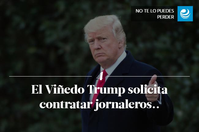 El Viñedo Trump solicita contratar jornaleros..