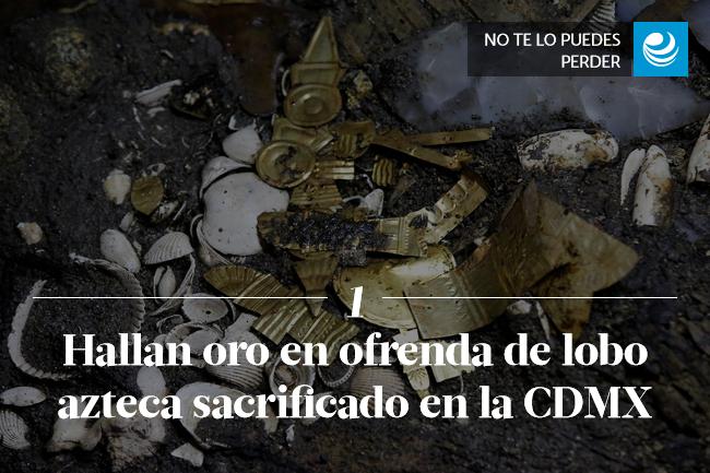 Hallan oro en ofrenda de lobo azteca sacrificado en la CDMX